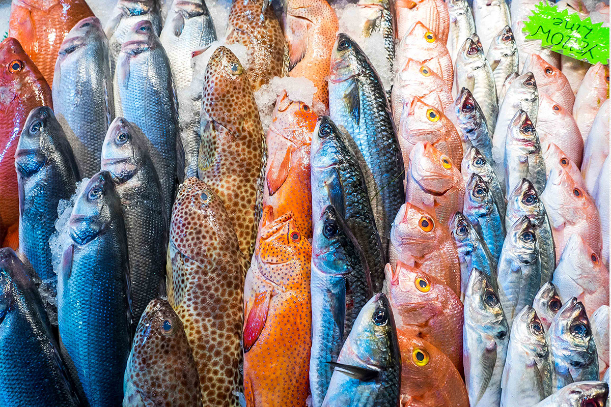 Inside the Bullring Fish Market